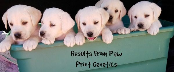 Genetic Testing Dogs- Paw Print Genetics